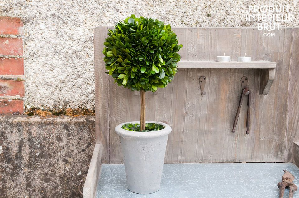 Boxwood ball in a grey pot