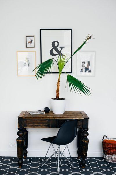 Plant voor schilderij